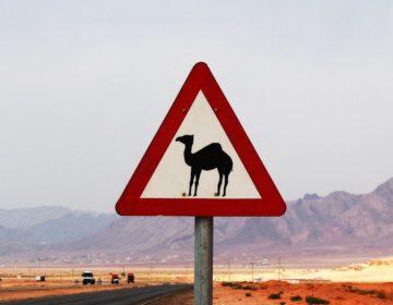 10 самых странных правил дорожного движения в мире