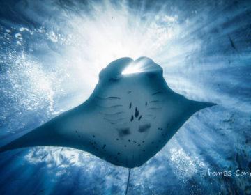 Где поплавать с гигантскими скатами и акулами